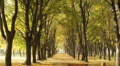 Avviso d'asta pubblica per la vendita del materiale legnoso ritraibile dal bosco Località Costa Rosari, particella forestale n. 26A. Importo a base d'asta € 16.822,69 oltre IVA